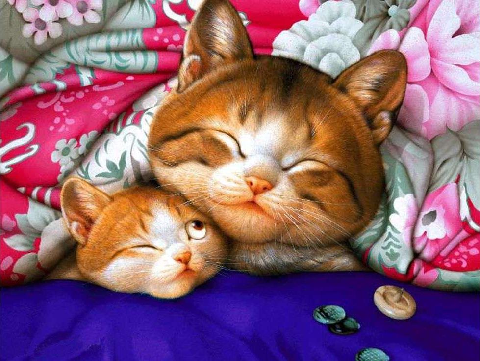 Котенок доброй ночи картинки